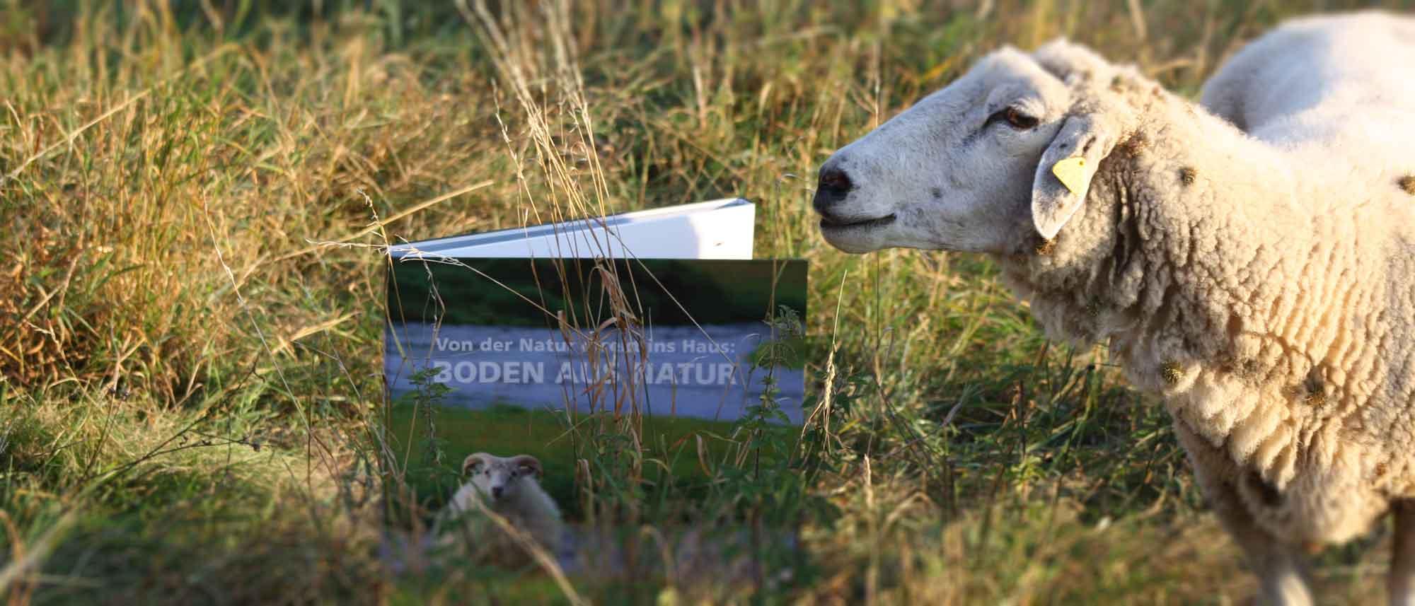 Schaf in der Wiese mit Teppichmuster